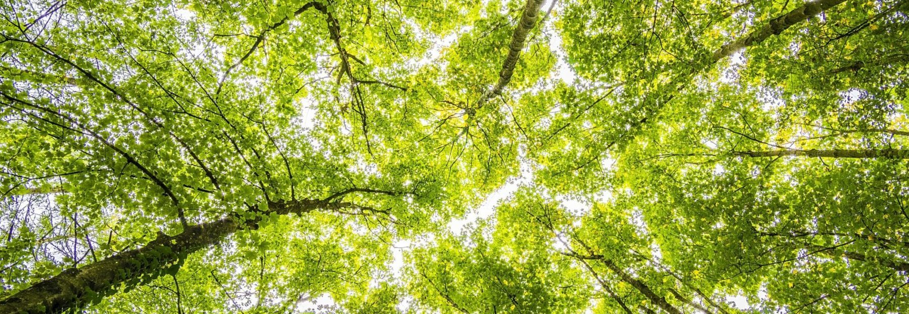 OXIVI | Bureau d'études - Thermique - Qualité de l'air intérieur